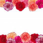 Frame Of Carnation Flower
