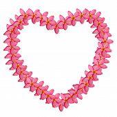 Plumeria Frame Heart