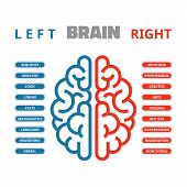 Left and right human brain vector illustration