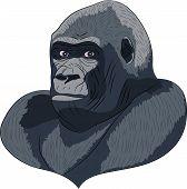Vetor Head Gorilla.