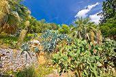 Mediterranean Plants Green Landscape View