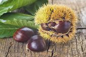 Chestnuts With Leaves On A Wooden Background