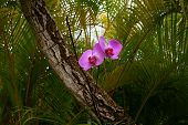 Wild orchids in tropical forest
