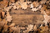 wooden background with withered leaves