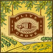 Retro Olive Grove. Vector