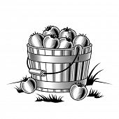 Retro bucket of tomatoes black and white. Vector