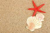 Starfish and seashell on sand background