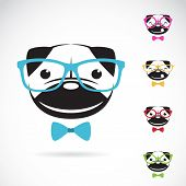 picture of pug  - Vector images of pug dog wearing glasses on white background - JPG