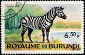 Zebra Stamp