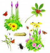 foto of summer insects  - Collection of summer flowers - JPG