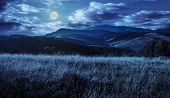 Постер, плакат: Meadow With Tall Grass In Mountains At Night