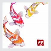 stock photo of koi fish  - Japanese watercolor carps koi swimming - JPG