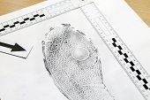 picture of criminology  - Footprint shoe protector disclosed during the examination - JPG