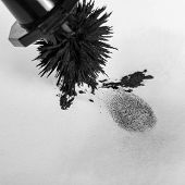 stock photo of criminology  - View of a fingerprint revealed by printing - JPG