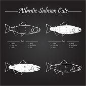 picture of redfish  - Norwegian Atlantic salmon cutting diagram illustration on chalkboard - JPG