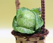 stock photo of brussels sprouts  - Brussels sprout  - JPG