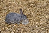 picture of rabbit hutch  - Cute and funny single rabbit drinking water - JPG
