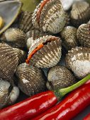 foto of clam  - Close up of fresh clam - JPG