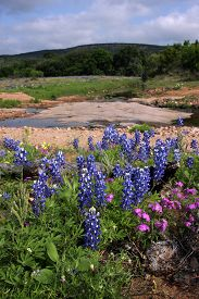 stock photo of bluebonnets  - Bluebonnets and other wildflowers bloom along a country road in the Texas Hill County.