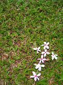 Single Flower Cross On Green Grass - Space For Copy