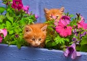 two young cat between flowers