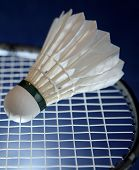 picture of game-cock  - Badminton racket and shuttlecock  on its strings - JPG