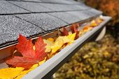 Leaves in a rain gutter