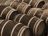 Wine Barrels in Sepia