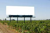 Blank Billboard in a vineyard off the freeway
