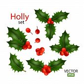 Realistic Image Set Of Holly, Different Variations, Christmas Symbol, Christmas Decor, Winter Berry. poster