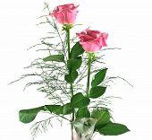 Gift Roses 4