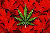 Canada Cannabis And Canadian Marijuana Concept And Law And Legislation Social Issue As Medical And R poster
