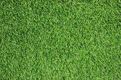 Green Grass Texture Background, Natural Field With Green Grass Growing On Outdoor Lawn. Vibrant Summ poster