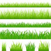 foto of grass  - 4 backgrounds of green grass and 4 tufts of grass - JPG