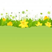 Nature Background With Green Leaves And Narcissuses, Vector Illustration