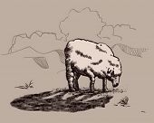 sheep in wolf's shadow.