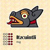 Aztec calendar symbols - Itzcuintli or dog (10)