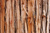Shredded Wood Texture