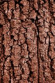 A Dried Mud Texture