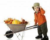 An adorable preschooler dressed in fall colors, tipping his hat as he pushes a wheelbarrow filled wi