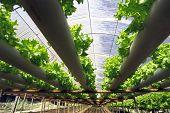 Hydroponische Plantage