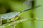 Grasshopper Saraburi