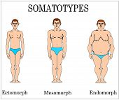 Types of somatic