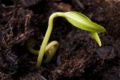 Seedling 06