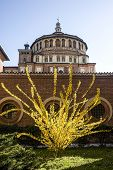 Santa Maria Delle Grazie (milan): Dome And Forsythia (early Spring)