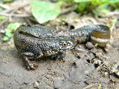Wet salamander