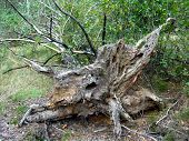 The Rotten Fallen Off Tree In A Forest