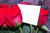 Rosas y una tarjeta de