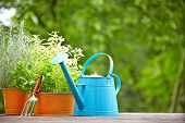 image of sprinkling  - concept of gardening and hobby - JPG