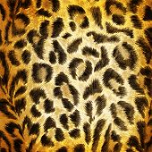 picture of panther  - Brown Cheetah pattern texture or background close up - JPG